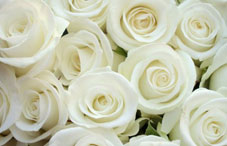 A bundle of white roses