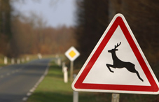 Deer crossing street sign