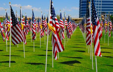 Countless American flags in a field