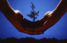 Hands holding dirt with a tree growing