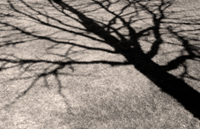 A trees shadow