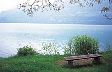 Bench on the coast of a river