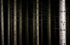 Dark forest of tree trunks
