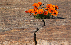 Flowers growing in barren crack