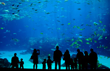 People at aquarium