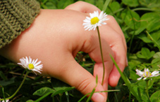 Hand of child picking flower