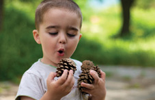 Child looking at pinecones