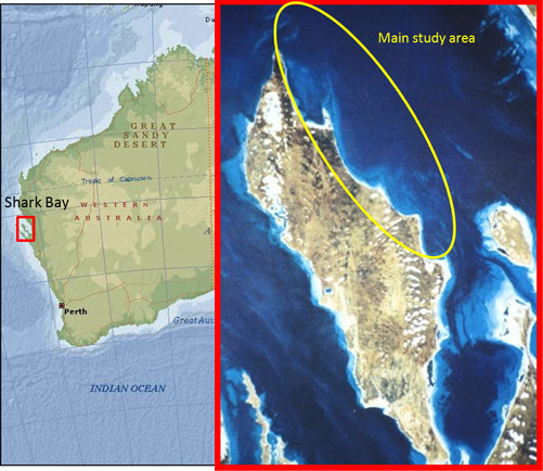 Figure 2. Map of Shark Bay and the main study area for the Shark Bay Dolphin Research Project