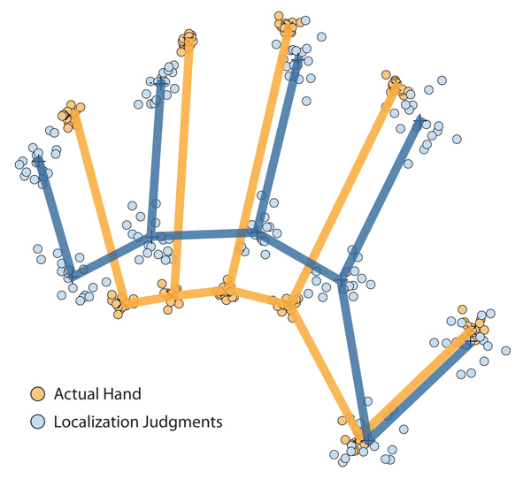 Figure 1: Distortions of body representations underlying position sense from Longo and Haggard's (2010) study. Maps of actual hand shape (red) and of represented hand shape inferred from localization judgments (green) from 18 participants are shown. The 36 maps were shifted, rotated and scaled using a statistical method called Procrustes analysis in order to isolate differences in hand shape.